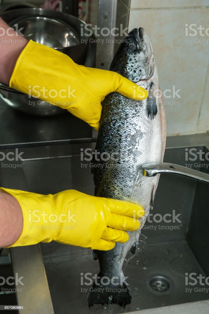 cleaning salmon fish stock photo