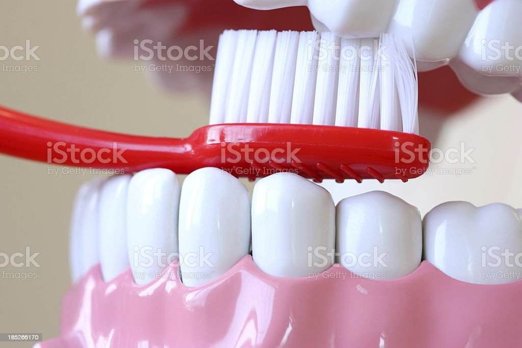 Cleaning Teeth royalty-free stock photo