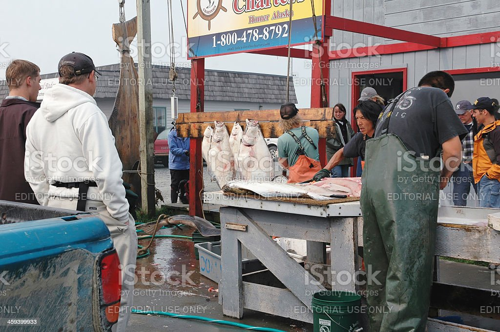 Cleaning the halibut, Homer,Alaska stock photo