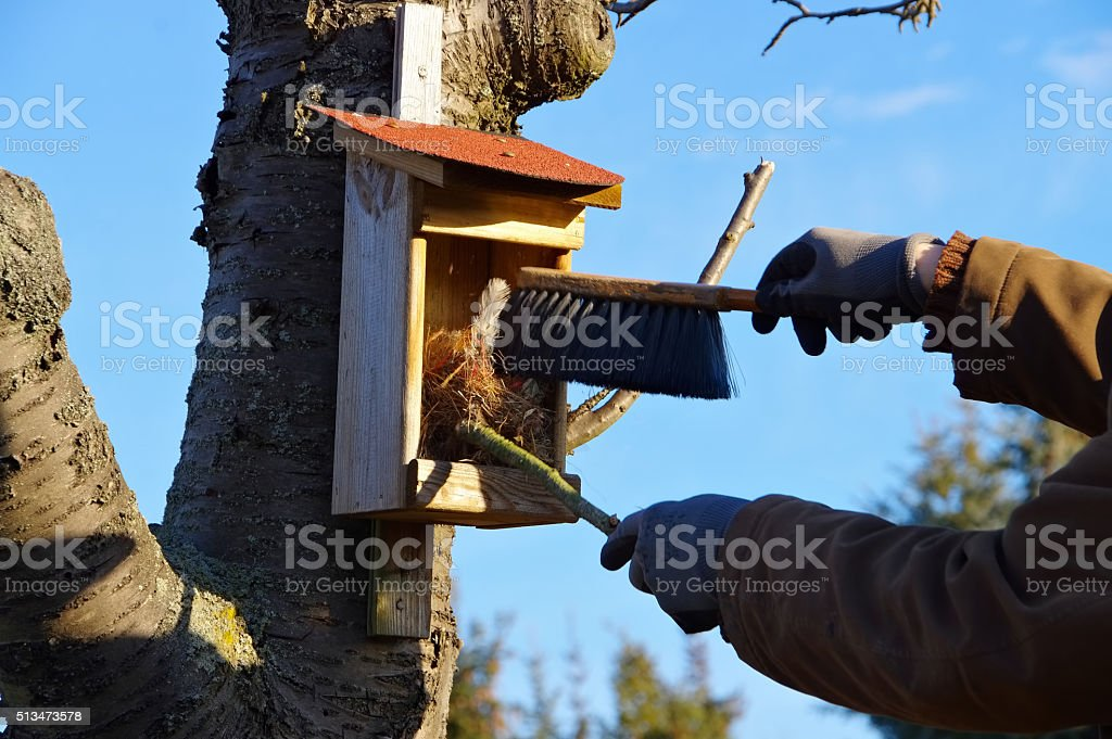 cleaning the nest box stock photo