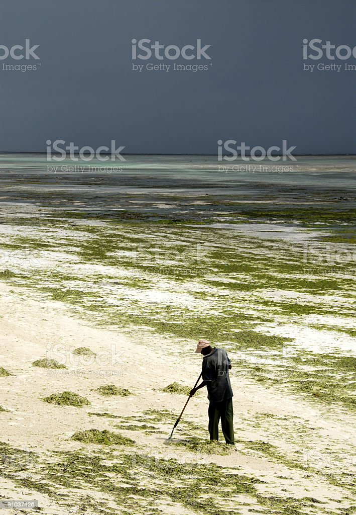 Cleanup of the beach royalty-free stock photo