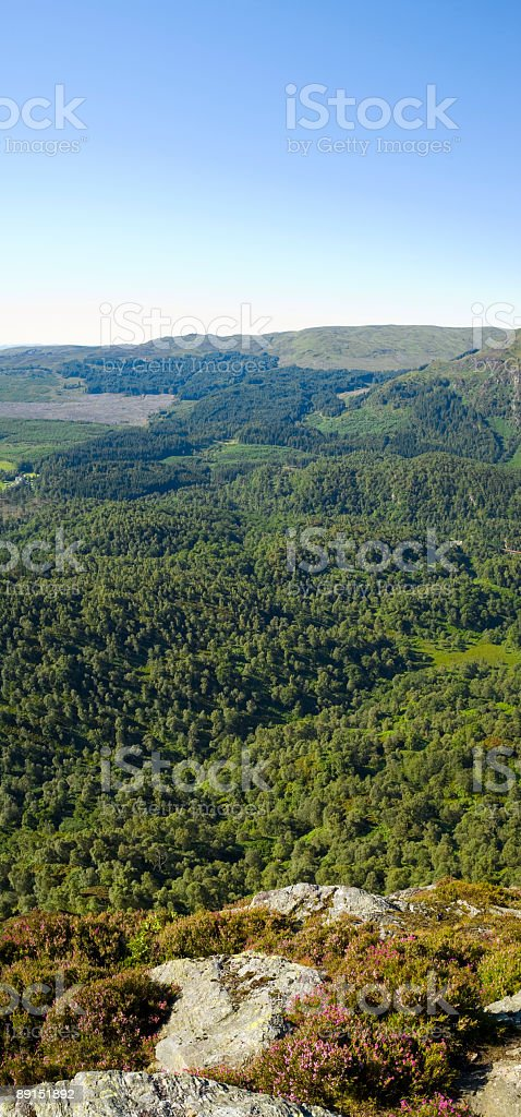 Clear blue sky, green wilderness royalty-free stock photo
