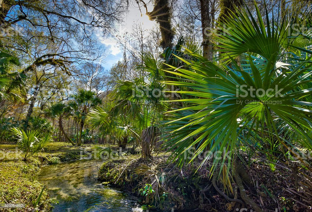 Clear Creek in Southern Forest stock photo