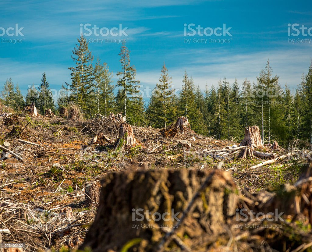 Clear Cut Forest stock photo