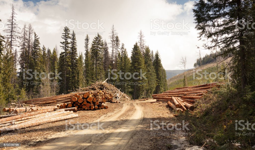 clear cut logging stock photo
