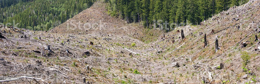 Clear cut logging slope stock photo