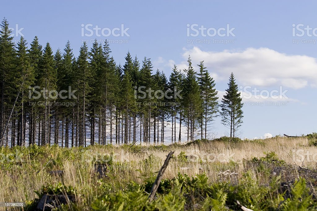 Clear cut royalty-free stock photo