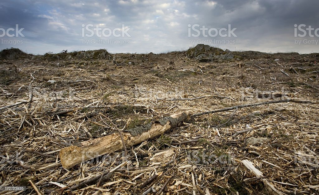 Clear cut. royalty-free stock photo