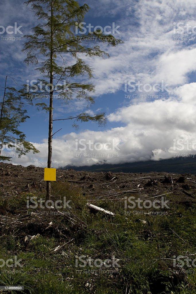 Clear cut tree stock photo
