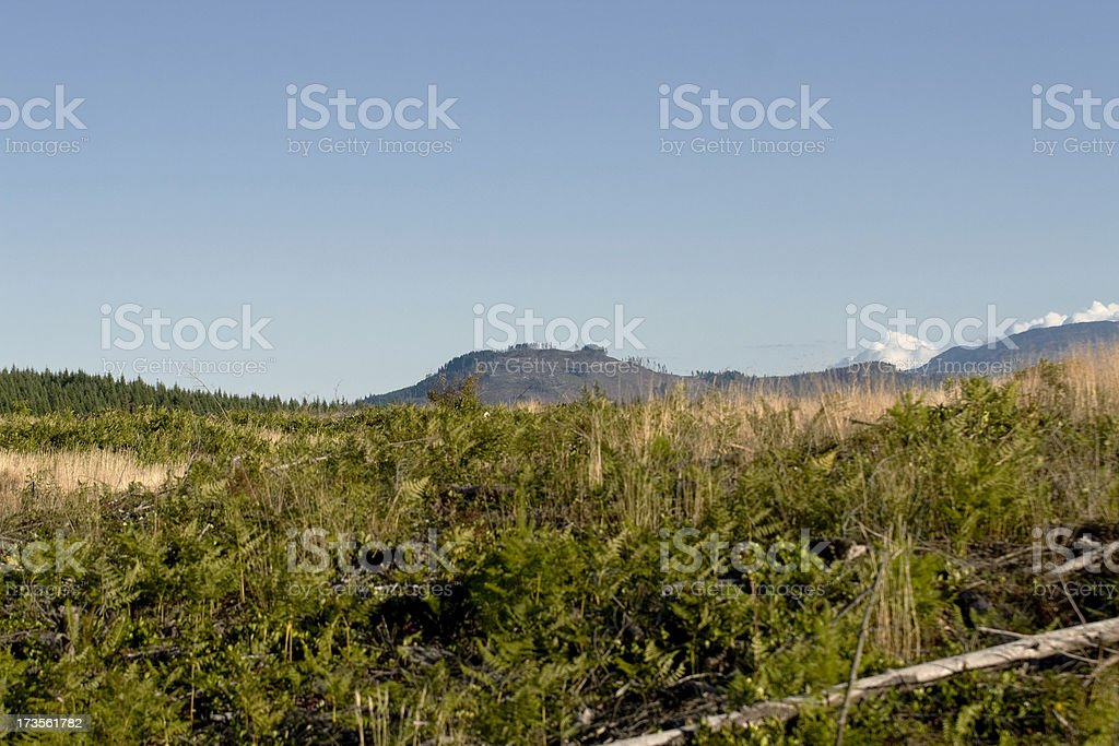 clear cuts stock photo
