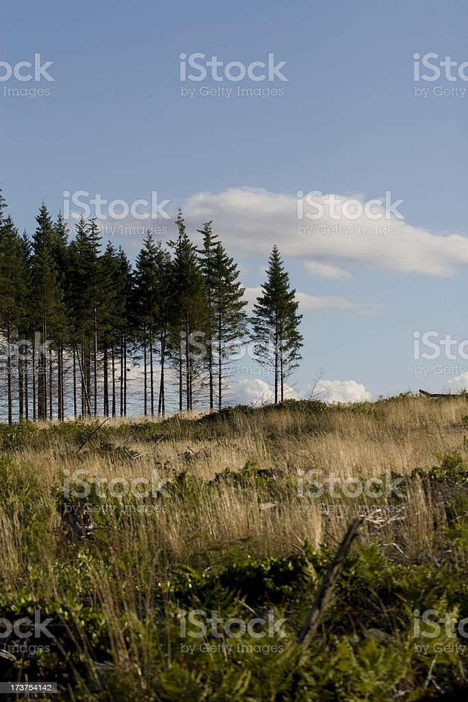 Clear cutting stock photo