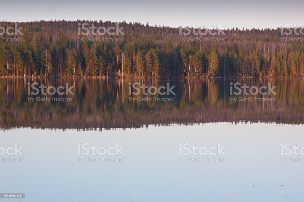 clear evening on the forest lake in Karelia stock photo