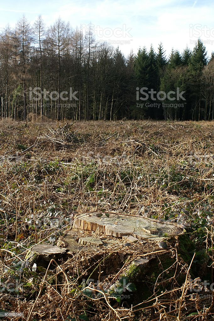 Clear Felling royalty-free stock photo