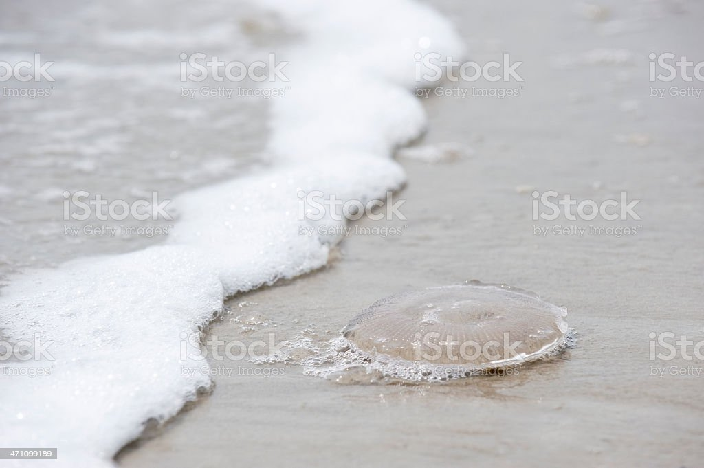 Clear jellyfish awaits small children royalty-free stock photo