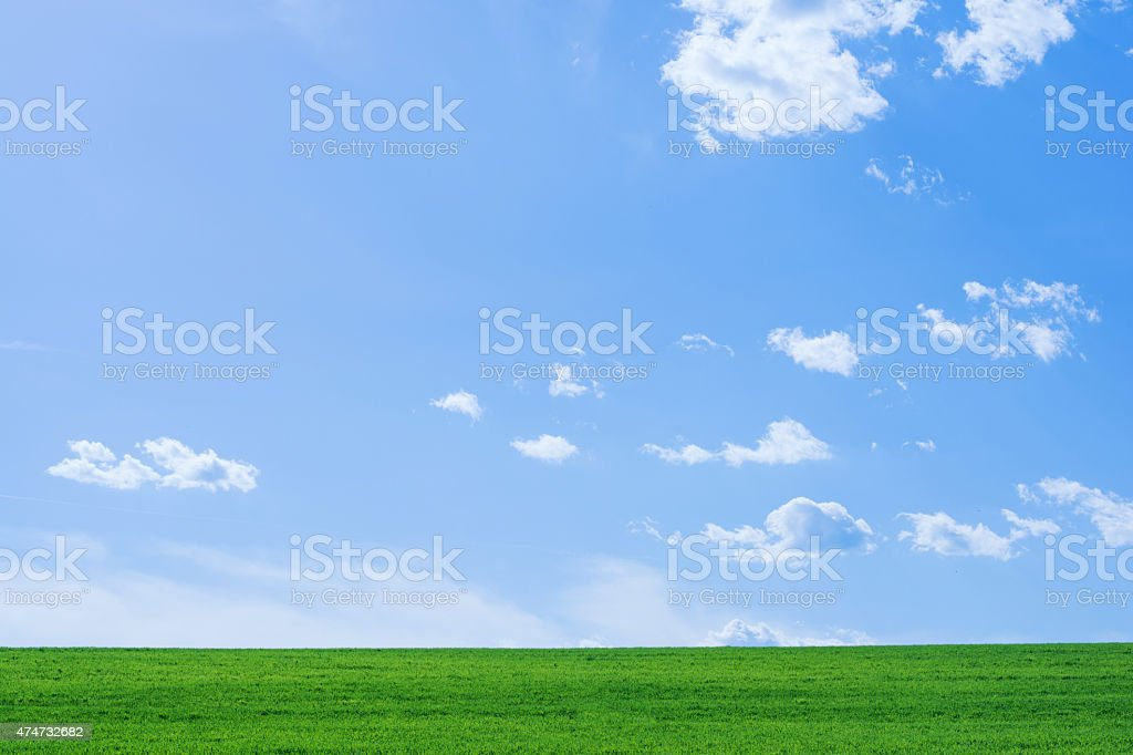 clear meadow stock photo