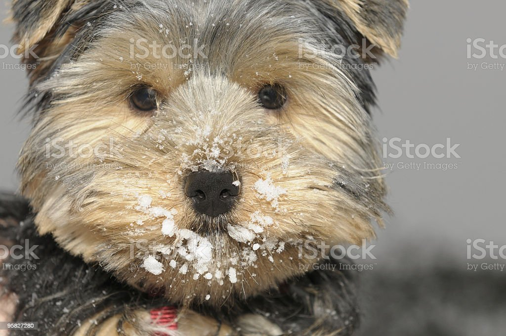 Clear nose royalty-free stock photo