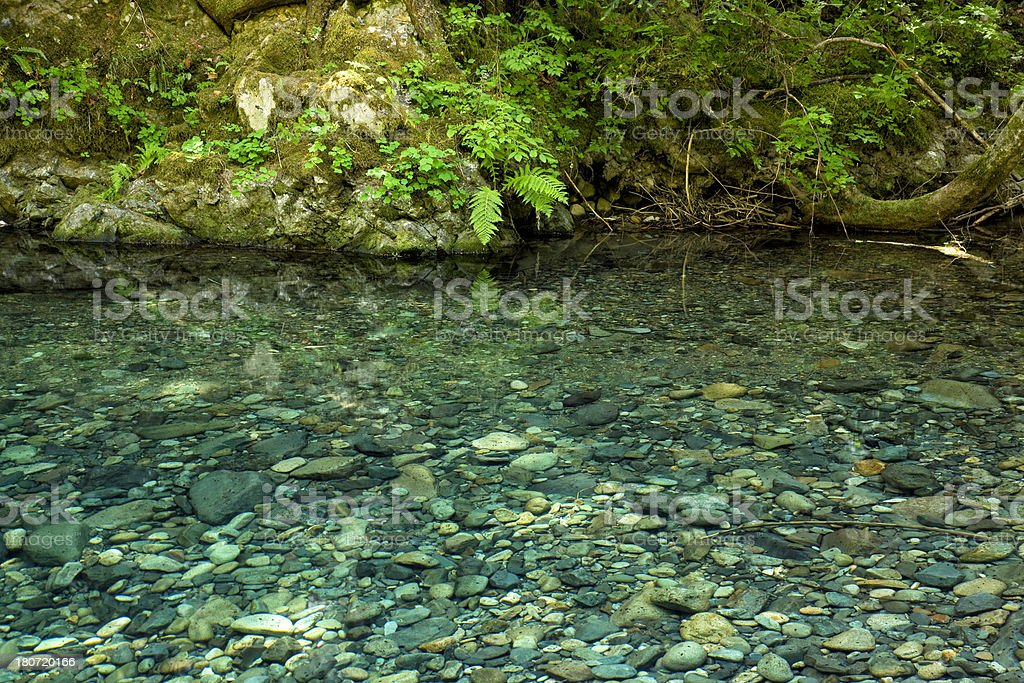 Clear pool in mountain stream surrounded by lush foliage royalty-free stock photo
