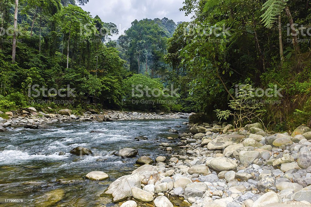 Clear river flowing through tropical jungle royalty-free stock photo