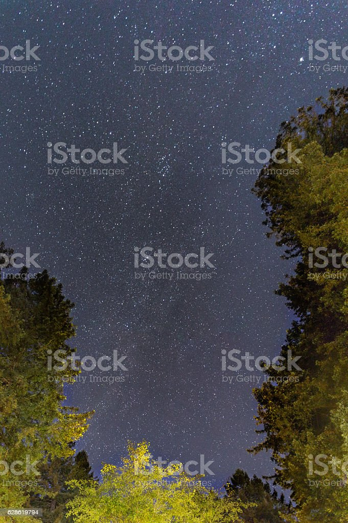 Clear Skies Over the Redwoods II stock photo