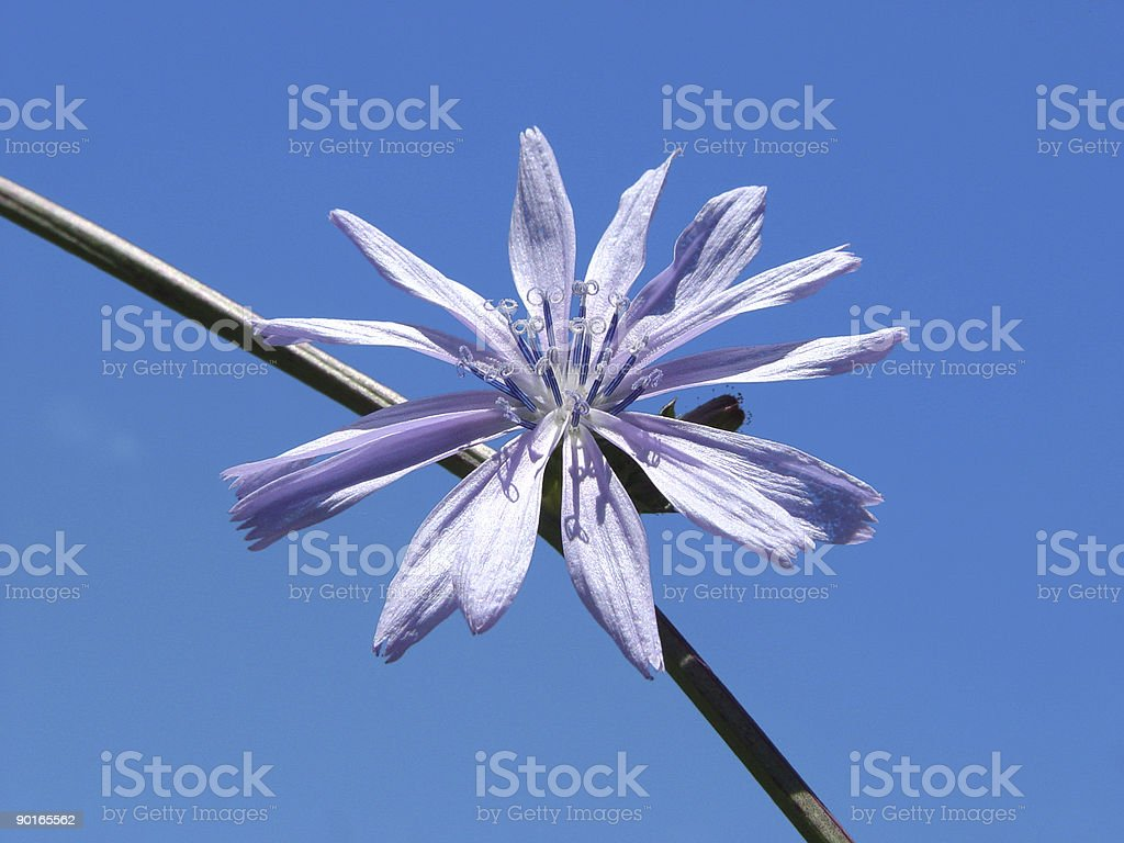Clear Sky Flower royalty-free stock photo