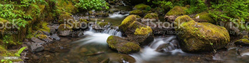 Clear water cascade in lush green forest wilderness stock photo