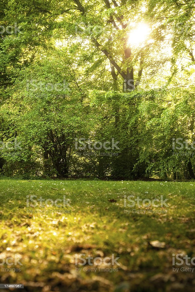 Clearance stock photo