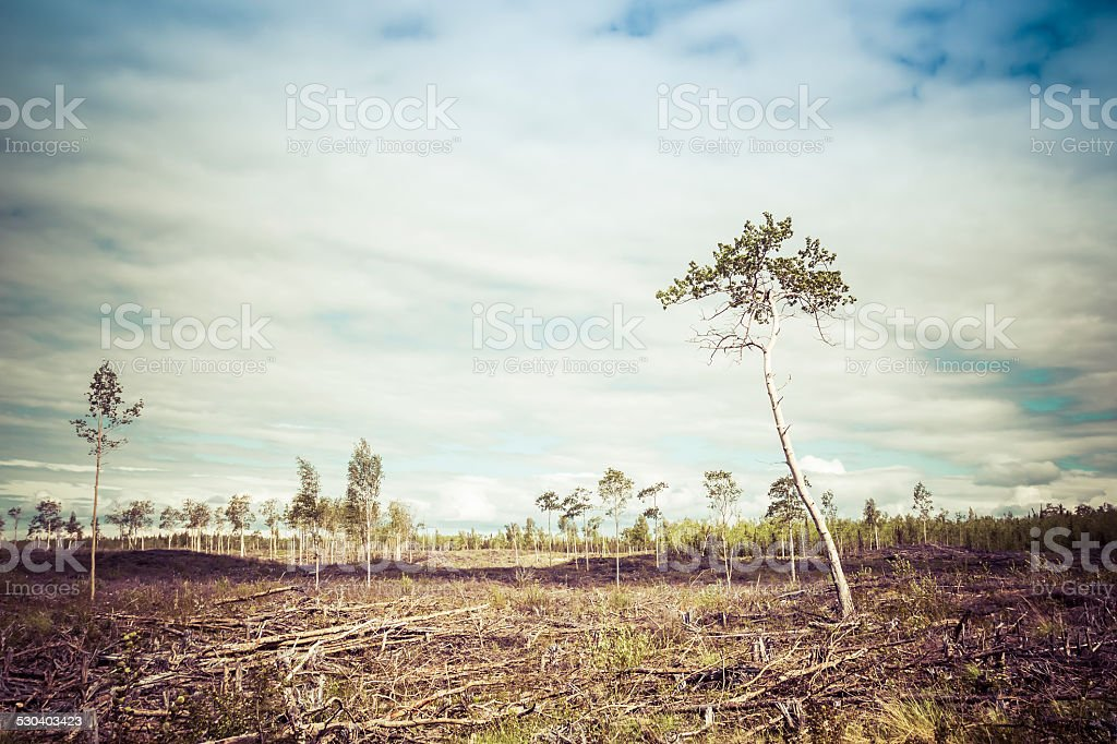Clearcut Aftermath stock photo