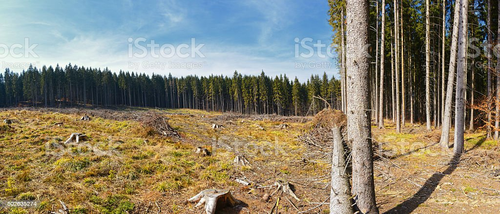 Clear-Cutting of a Pine Forest stock photo