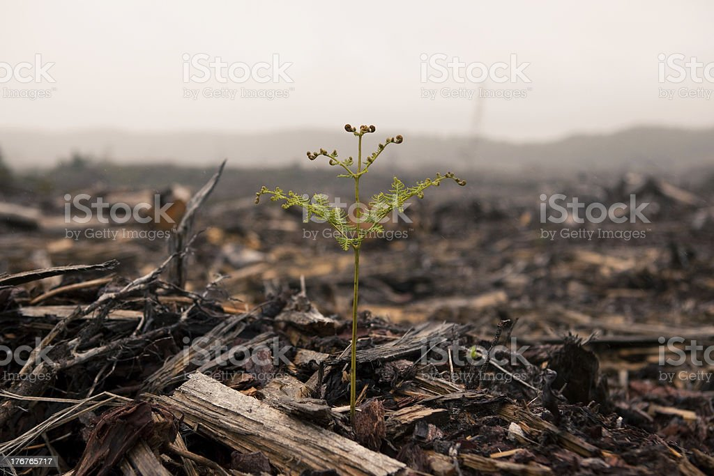 Clearfelling Remains stock photo