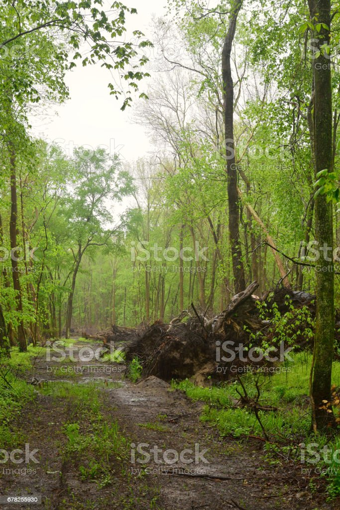 Clearing Forest Road Along Pocomoke stock photo