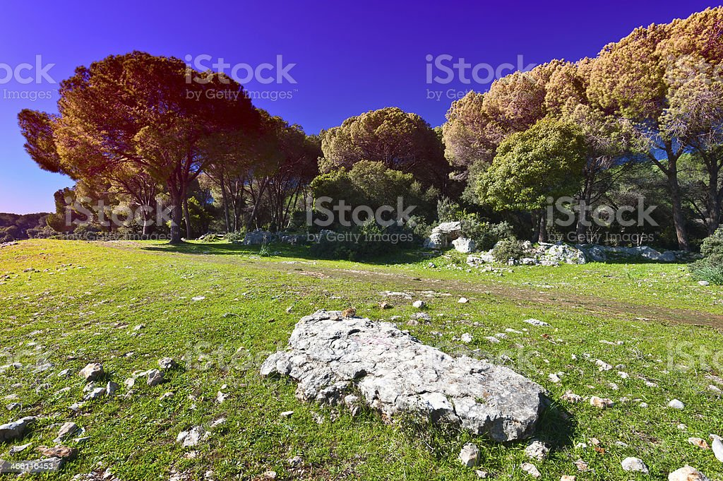Clearing in Galilee royalty-free stock photo