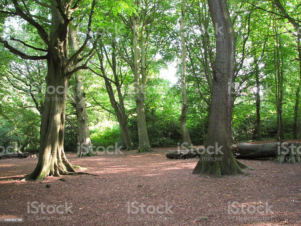 Clearing in the Forest During Spring stock photo