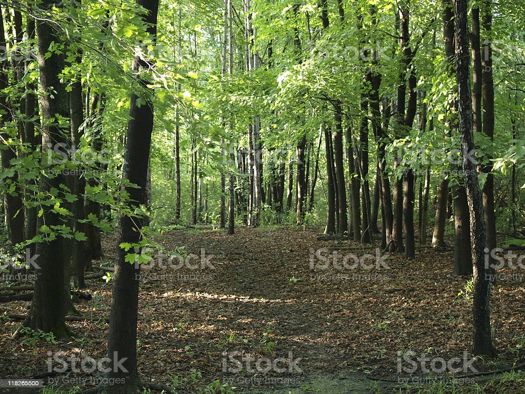 Clearing in the woods of dappled green leaves royalty-free stock photo