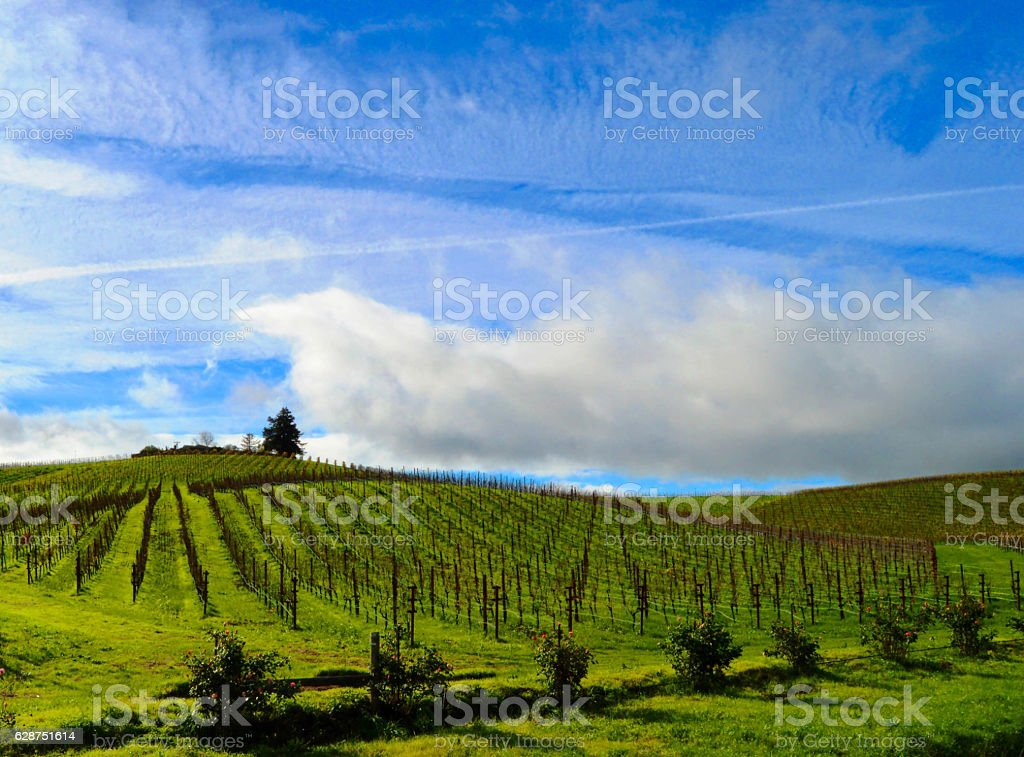 Clearing storm over Carneros region of Sonoma, CA stock photo