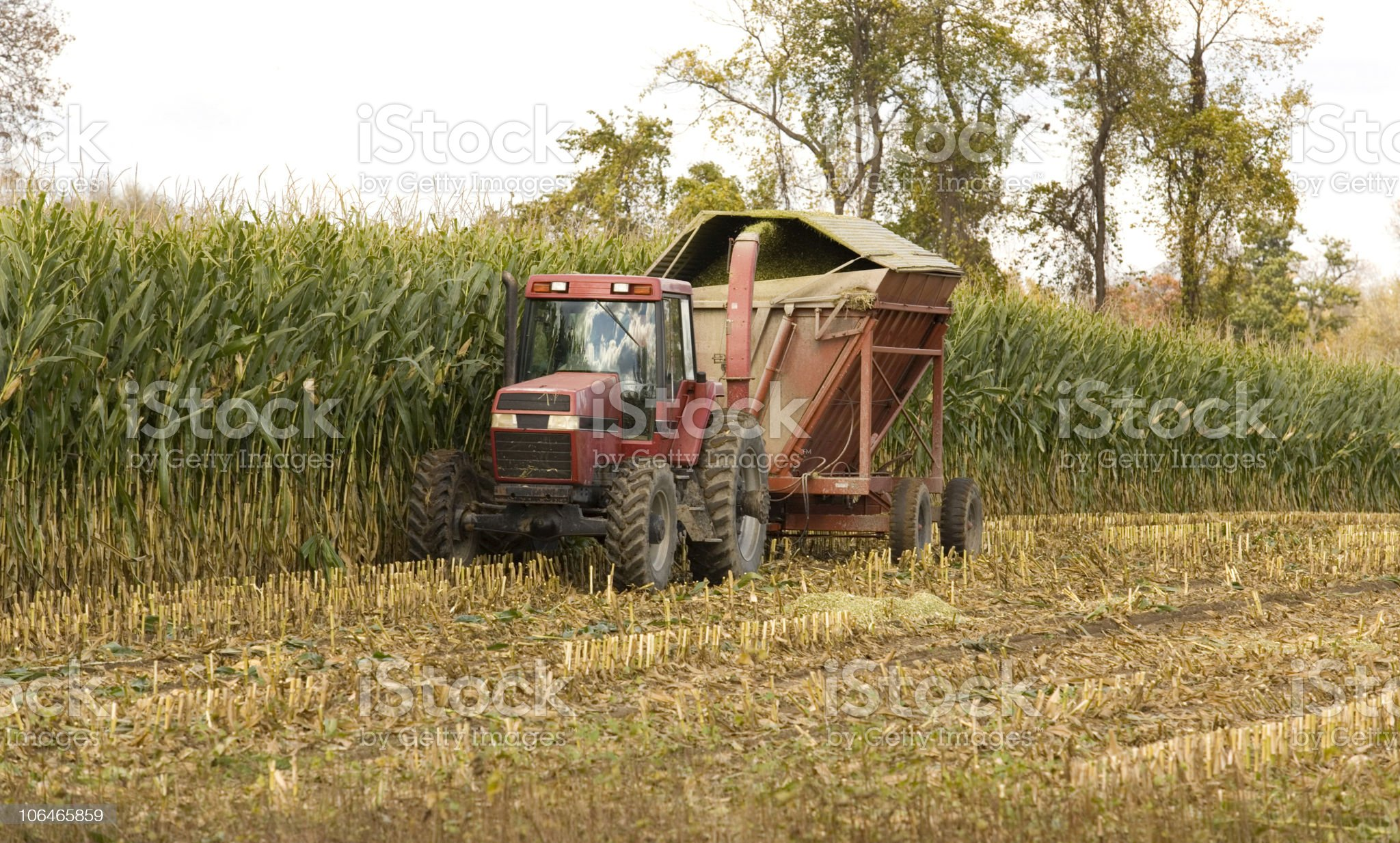 Clearing the Field royalty-free stock photo