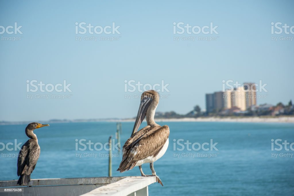 Clearwater Beach stock photo