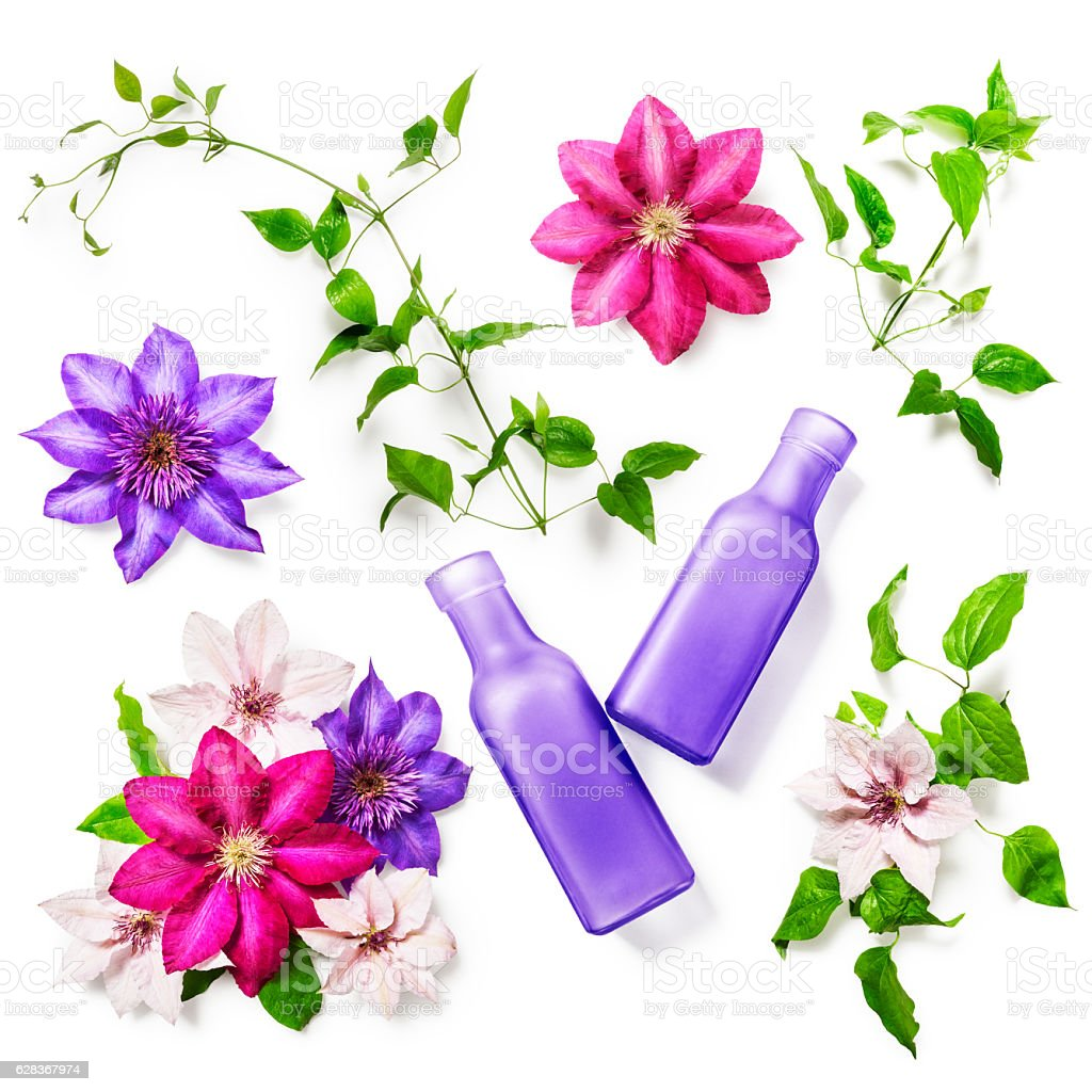 Clematis flowers and vases stock photo