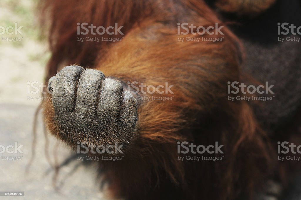 clenched hand royalty-free stock photo