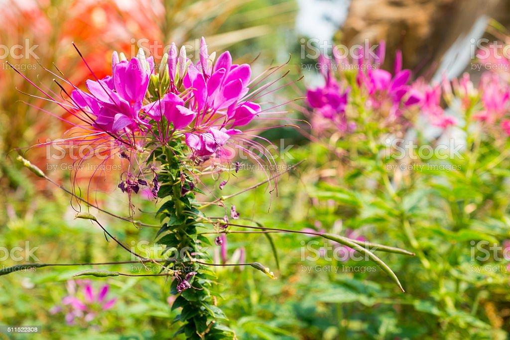 Beech im Garten Lizenzfreies stock-foto