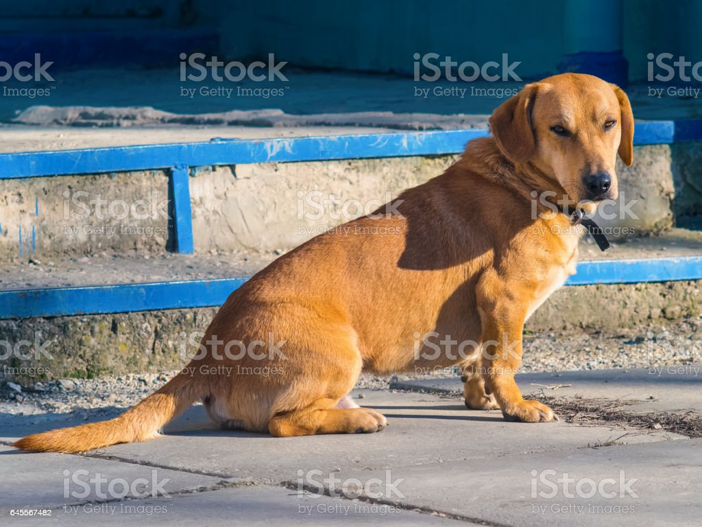 Clever dog looking directly at the camera stock photo