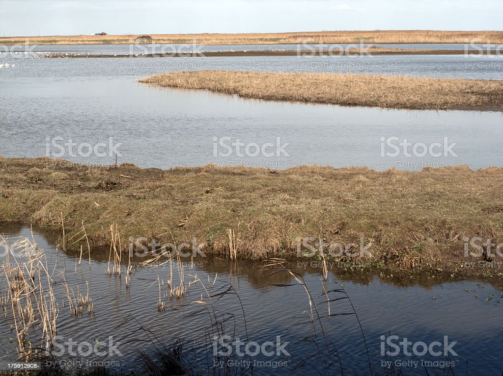 Cley Marshes, North Norfolk royalty-free stock photo