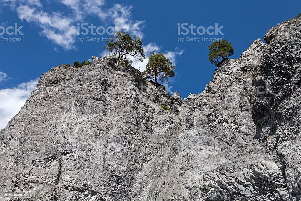 Cliff and Trees stock photo