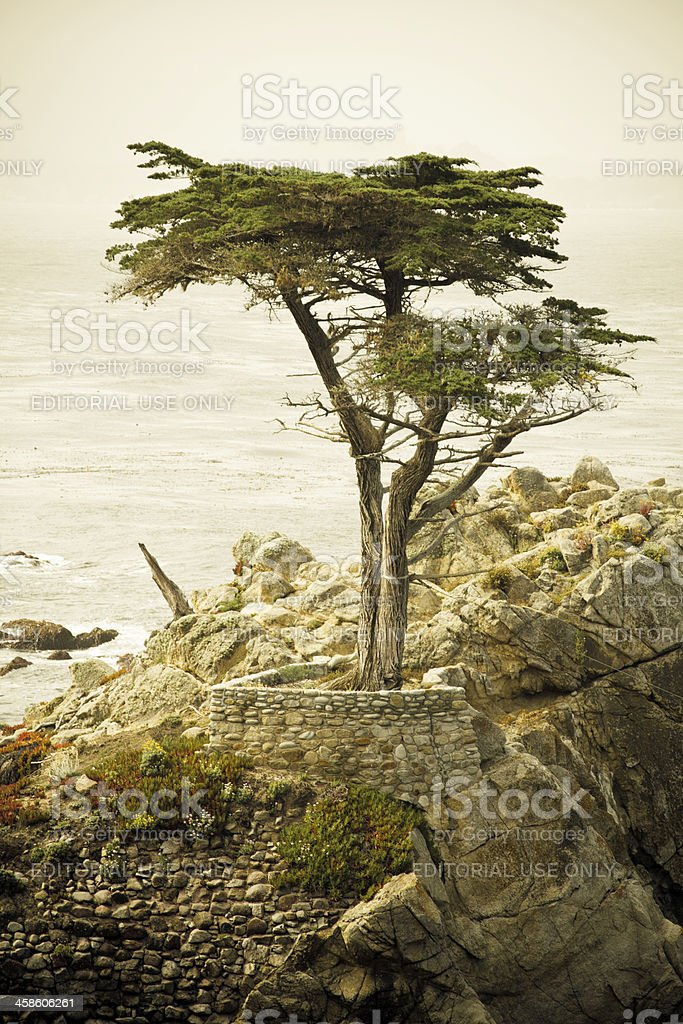 Cliffside Cypress Tree stock photo