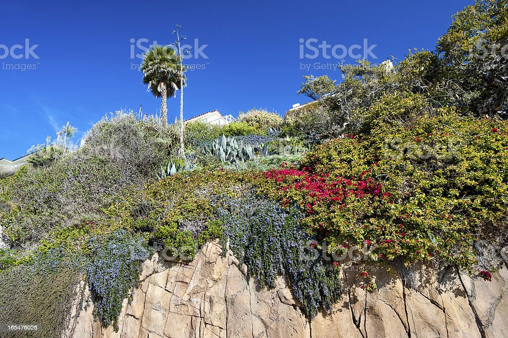 Cliffside flowers royalty-free stock photo