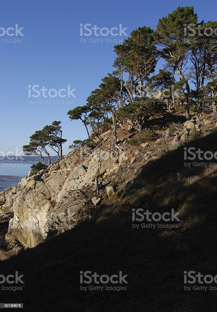 Cliffside Monterey Cypress Trees at Point Lobos stock photo