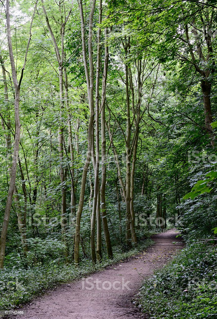 Clifton Wood Path royalty-free stock photo