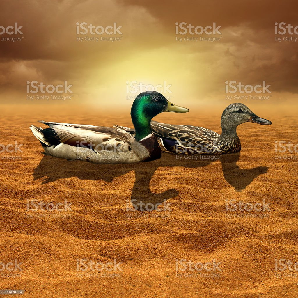 Climate Change stock photo