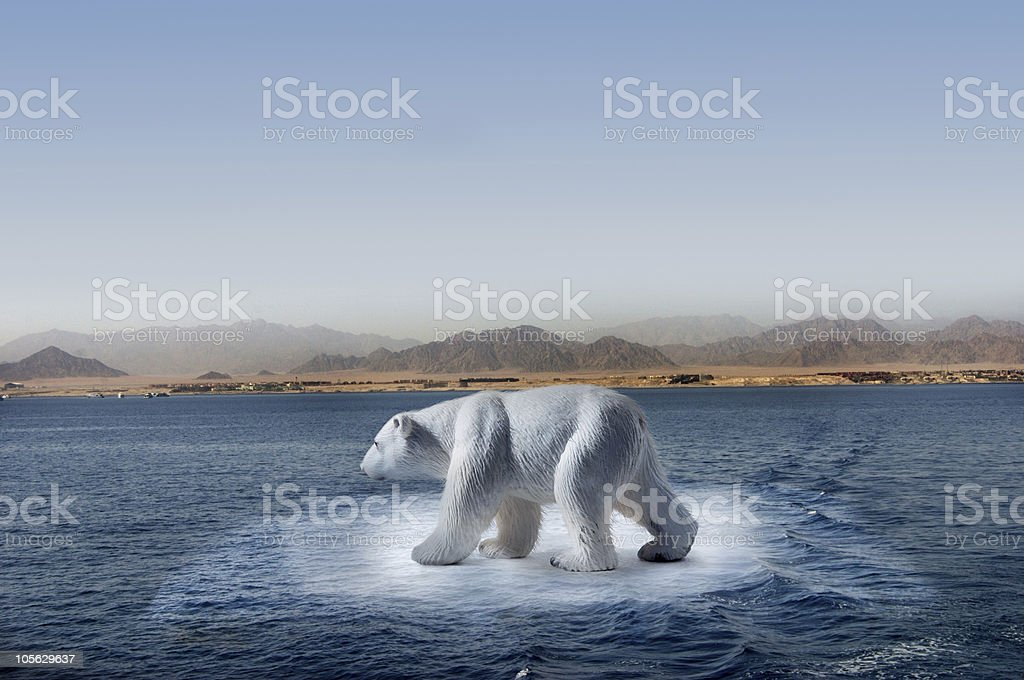 climate change polar bear stock photo