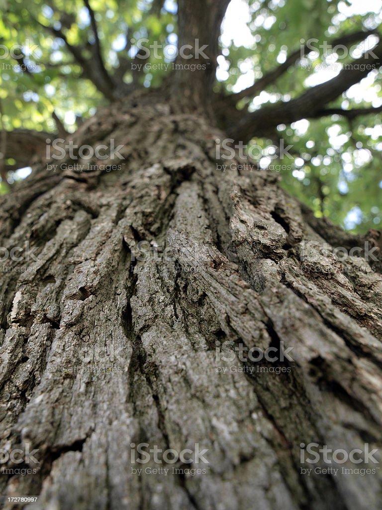 Climb a tree! royalty-free stock photo