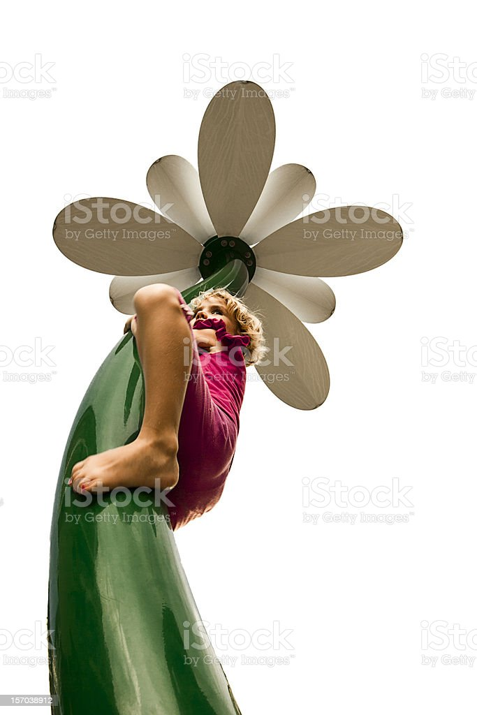 Climbing a flower royalty-free stock photo